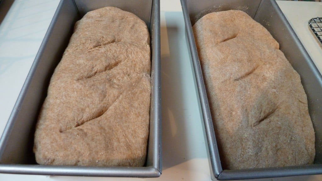 Tassajara Bread ready for the oven