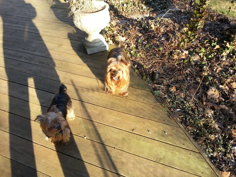 Stanley, Stella me and my shadow