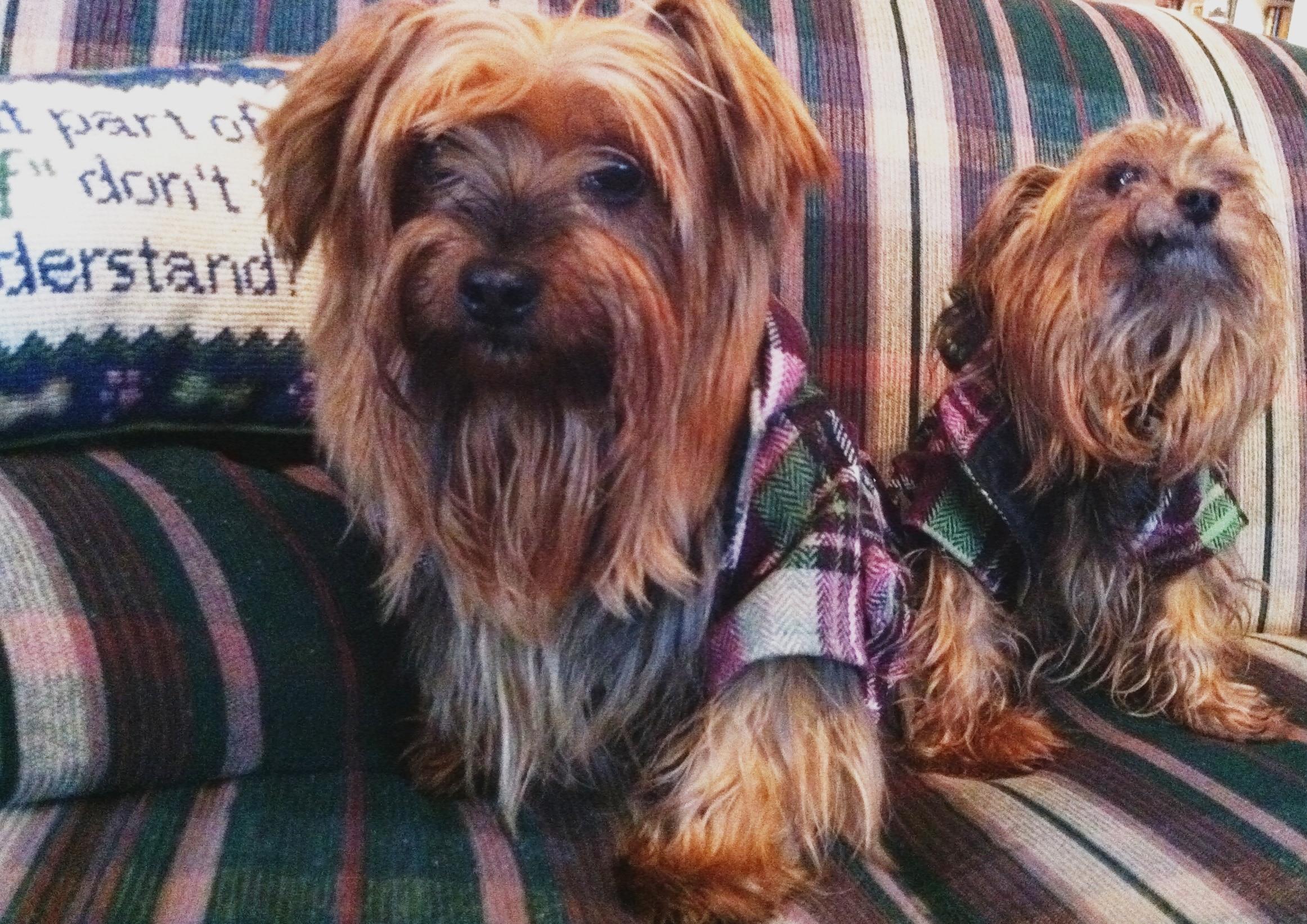 Stella & Stanley