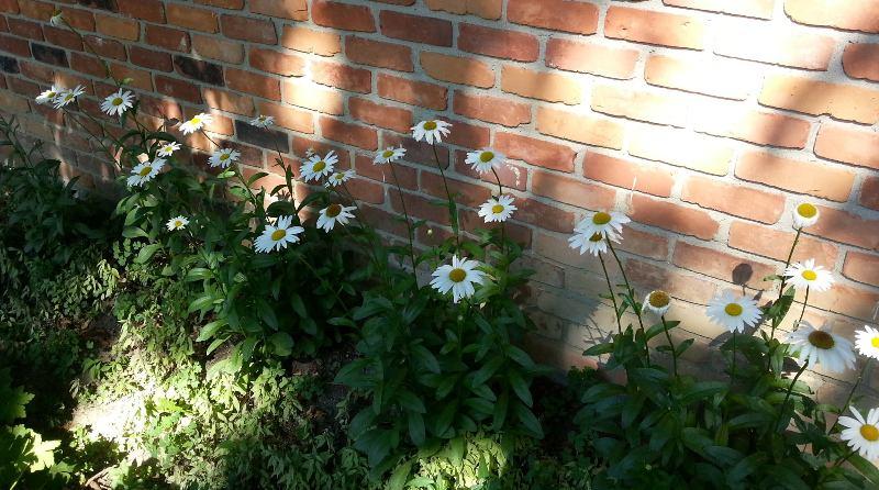 Garden for Bees & Butterflies