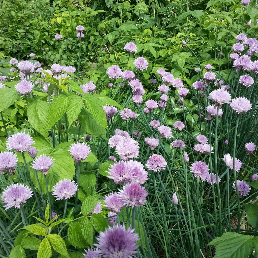 Lanergan Drive garden